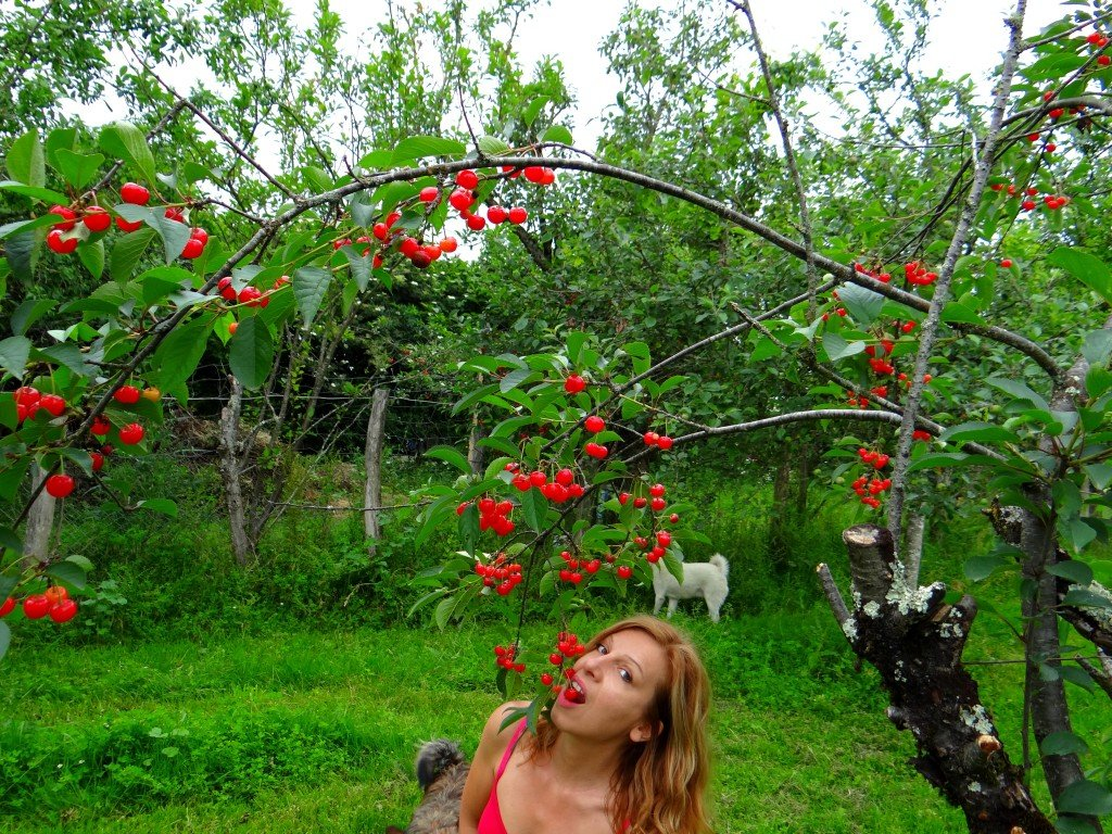 féline harfang - rouge cerise - juillet 2013