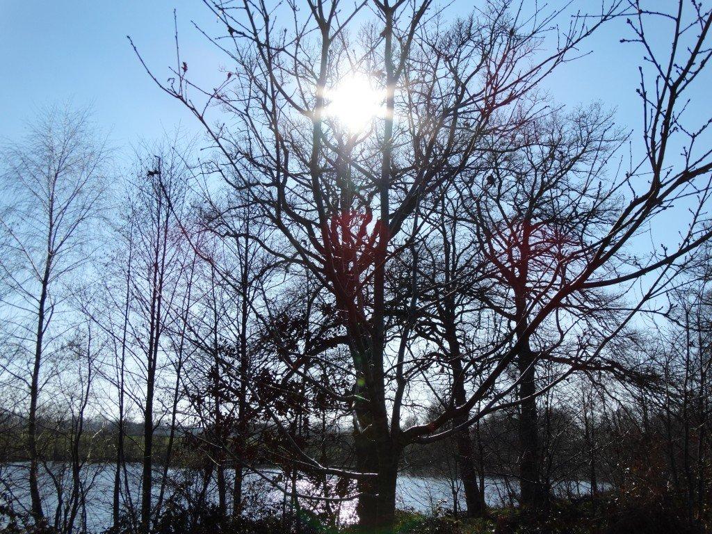 Un étang à Velles