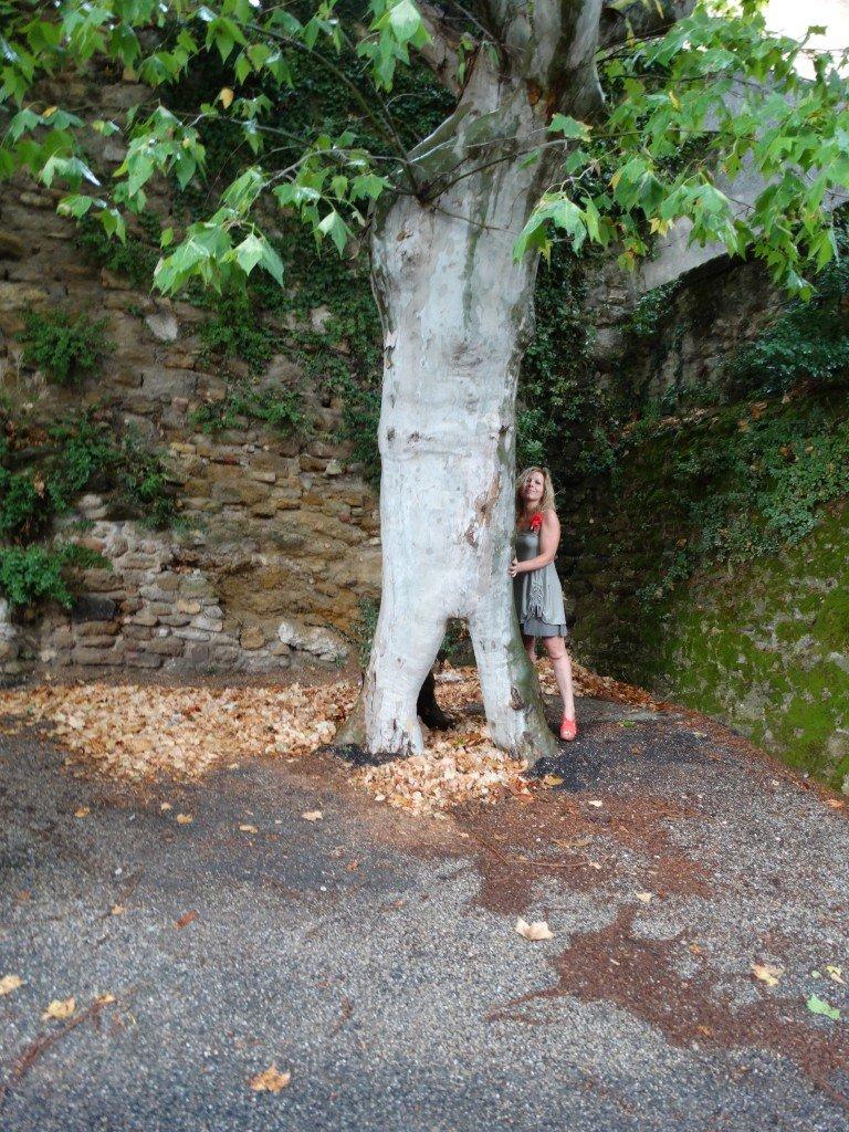 Féline et l'arbre