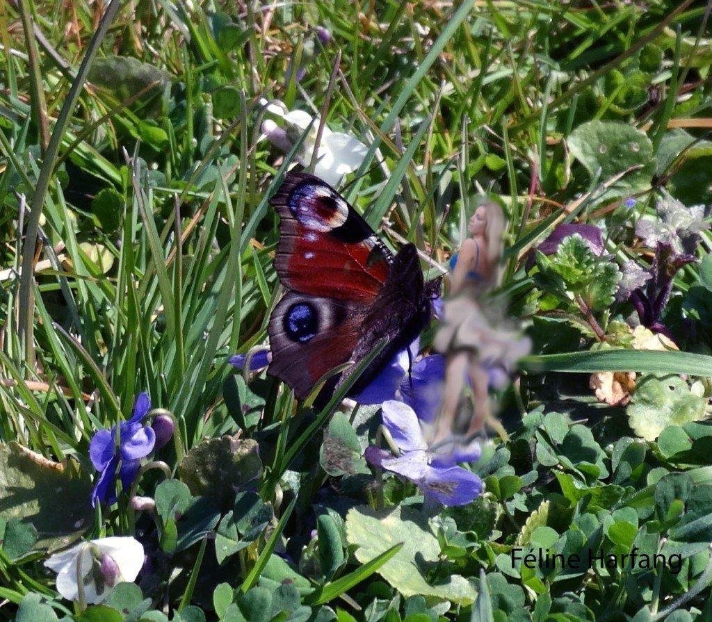 violettes et paon de jour
