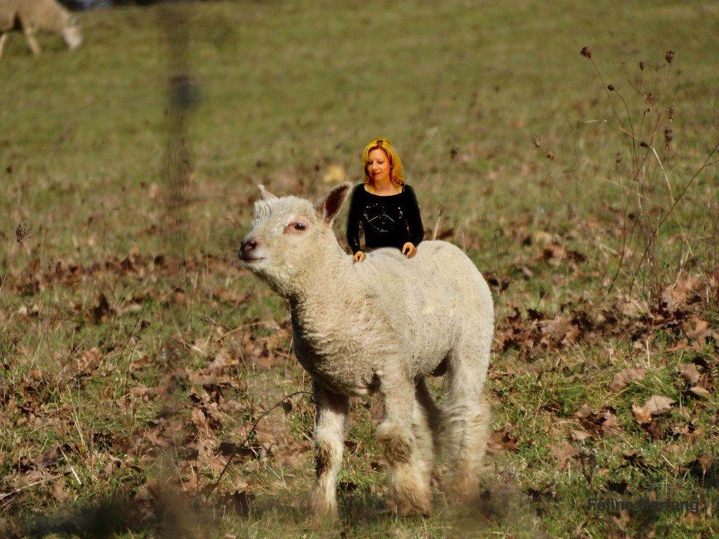 féline et l'agneau
