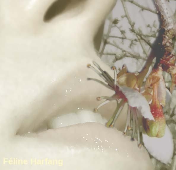fleur de prunier sauvage explore la bouche de féline