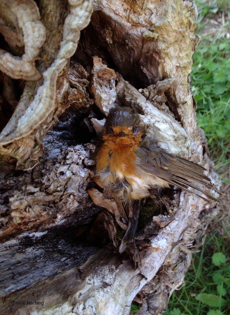 oiseau mort dans le creux d'un arbre