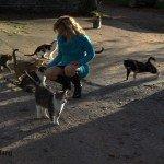 féline entourée de chats