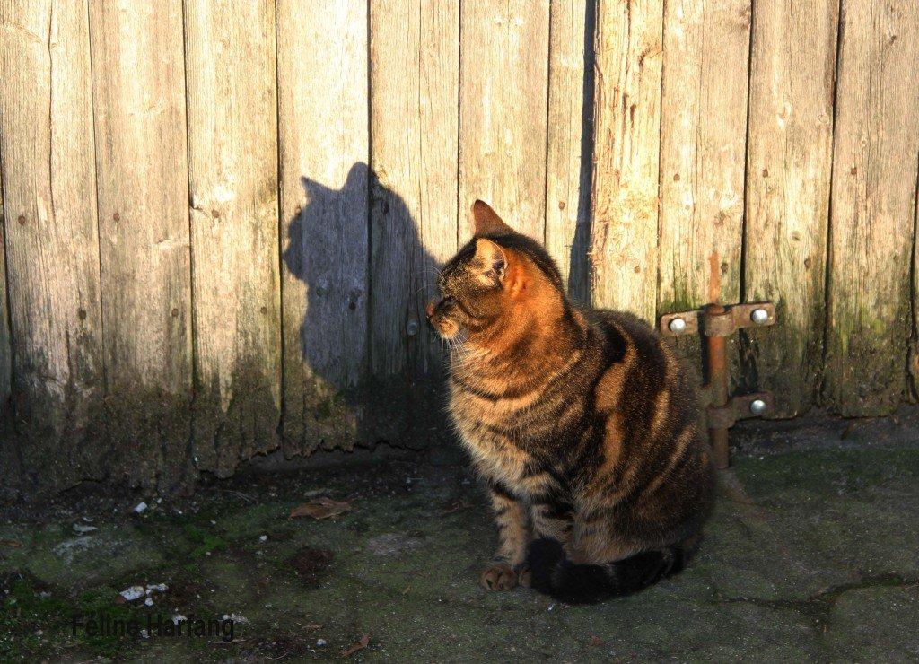 la chatte et son ombre