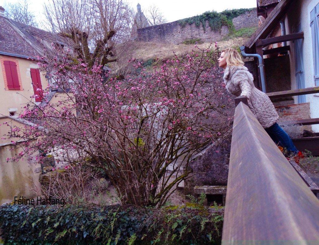 féline devant la maison de gargilesse