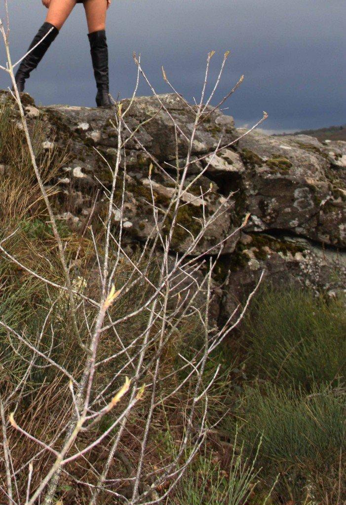 les jambes de féline sur un rocher de la fileuse