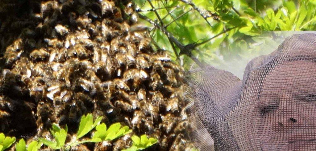 essaimage du 29 avril 2017 autophotographie de Féline en tenue d'apicultrice