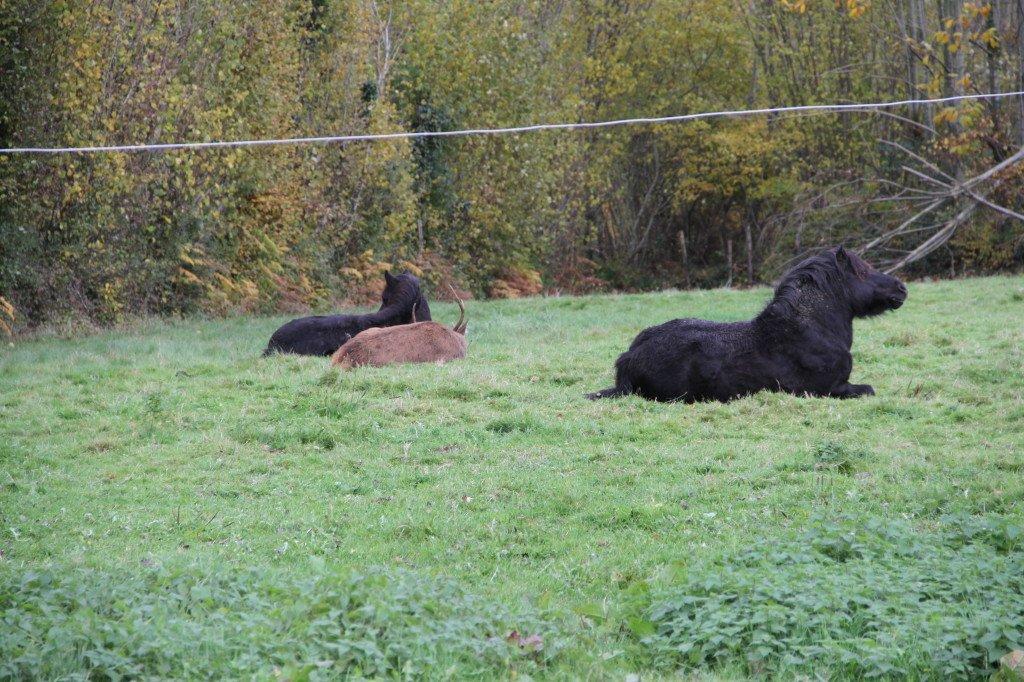 Flambi dormait paisiblement près de son ami poney à 13 h lundi 13 novembre 2017 !