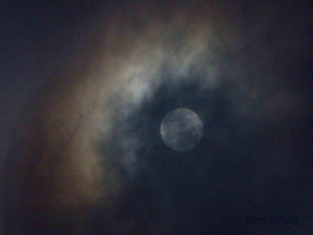 la lune bleue du 31 janvier 2018 féline harfang